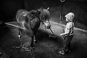 20140718, Gent, Belgium, Aube is learning how to give Jef the pony a shower during her summercamp