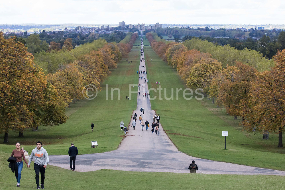 Horse chestnut trees lining the Long Walk in front of Windsor Castle display early autumn colours on 11 October 2020 in Windsor, United Kingdom. Horticulturalists have predicted a spectacular display of autumn colours in the UK following sunny weather in the spring and September as well as sufficient rain during the summer.