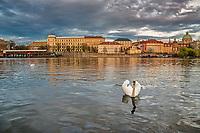 Prague, la ville aux mille tours et mille clochers, n'a pas seulement inspire Andre Breton et les surrealistes. Chaque annee, la belle Tcheque seduit des millions d'admirateurs du monde entier. Monuments, façades et statues racontent une histoire mouvementee ou planent les ombres du Golem, de Mucha ou de Kafka.<br /> Depuis 1992, le centre ville historique est inscrit sur la liste du patrimoine mondial par l'UNESCO