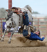 Saddle Bronc rider Nile Thompson is bucked off his ride during the CPRA Rodeo at the Boulder County Fairgrounds on Sunday. Go to timescall.com for more photos.<br /> <br /> Matthew Jonas / Staff Photographer Aug. 2, 2015