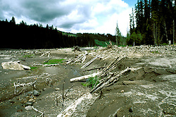 Washington: Volcano, devastation, Mt. St. Helens, mud flow at Muddy Creek, photo: wahele103  .Photo copyright Lee Foster, www.fostertravel.com, 510/549-2202, lee@fostertravel.com