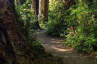 A pathway winding through the Hoh Rainforest in Washington's Olympic National Park.