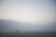 In the Fog - lone wild horse (Equus ferus caballus) in Dunduru pļavas, Kemeri National Park (Ķemeru Nacionālais parks), Latvia Ⓒ Davis Ulands | davisulands.com
