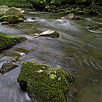 NORTH CAROLINA. Mossy rocks in Oconaluftee River, Great Smoky Mountains National Park, Appalachian Mountains.