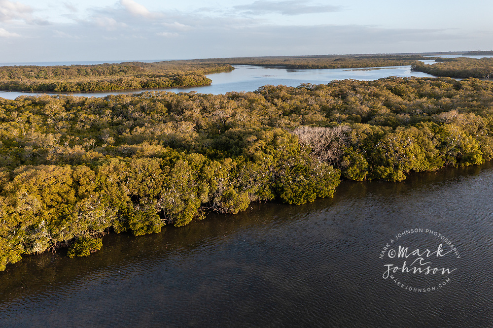 Aerial view of cormorants roosting in mangrove trees along the Pumicestone Passage, a waterway between Bribie Island and the mainland, Caloundra, Sunshine Coast, Queensland, Australia