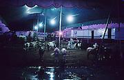 CIRCUS RAIN, Amazon, near Boavista, northern Brazil, South America. Bedraggled ponies shelter at night in circus tent