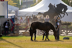 Atmosphere cooling down<br /> CHIO Aachen 2021<br /> © Hippo Foto - Sharon Vandeput<br /> 18/09/21