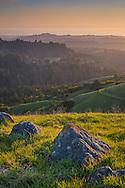 Sunset light on green grass and hills in spring, Russian Ridge Open Space Preserve, Santa Cruz Mountains, San Mateo County, California