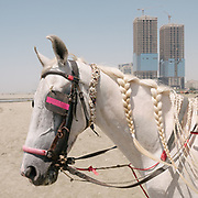 New development high rise are side by side with slum area on Clifton Beach (also known as Seaview) an area very popular with locals. Untreated sewage water flows here into the Arabian Sea. You can rent out horses and camels on the beach, for picture opportunities.