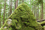 Moss covering a triangular boulder along Diobsud Creek Trail, Mount Baker-Snoqualmie National Forest, Washington.