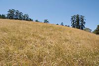 Bear Valley area, Point Reyes National Seashore, California