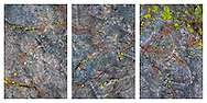 A set of three close-up views of rocks covered with lichens, moss and rust.
