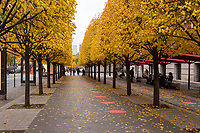 Lone Linden trees in front the Metropolitan Museum Nov. 11, 2020.