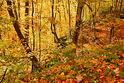 Hardwood forest in autumn color<br /> Horseshoe Lake near Parry Sound<br /> Ontario<br /> Canada