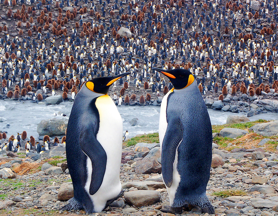 Antarctic penguins have a conversation on dry land. Photo by Adel B. Korkor.