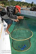 Pecheur relevant un filet plein de chirurgiens bleus destinés à l'aquariophile<br /> <br /> Chirurgien bleu, Paracanthurus hepatus, village de Bonebaru sur l'ile Banggai dans les Sulawesis en Indonésie - Mission Banggai Cardinal Fish, Mai 2008, Act for Nature - Musee oceanographique de Monaco