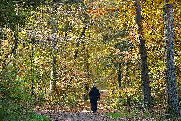 Nederland, Berg en Dal, 1-11-2015 Een vrouw ( van de fotograaf) loopt in het bos met Nordic Walking stokken. Nordicwalkingstokken, nordicwalking, walkingstokkenFOTO: FLIP FRANSSEN/ HH