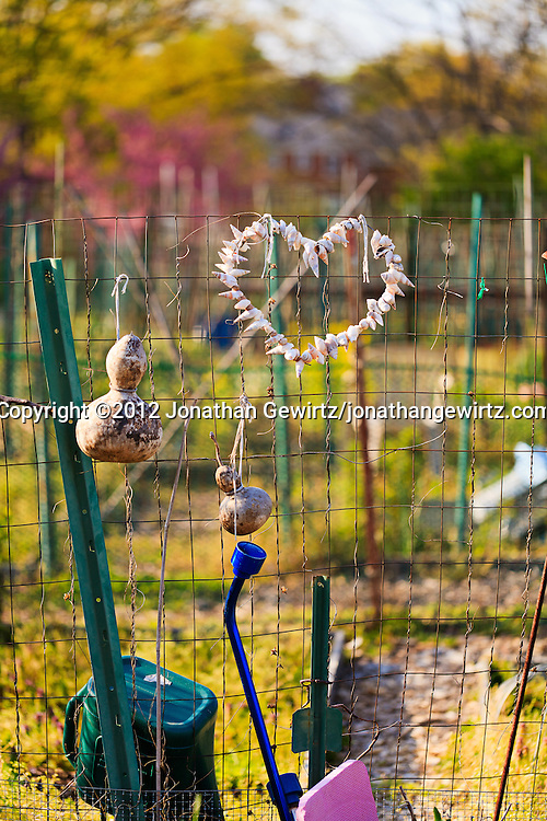 A heart made from strung-together seashells adorns a wire fence in a community garden. WATERMARKS WILL NOT APPEAR ON PRINTS OR LICENSED IMAGES.