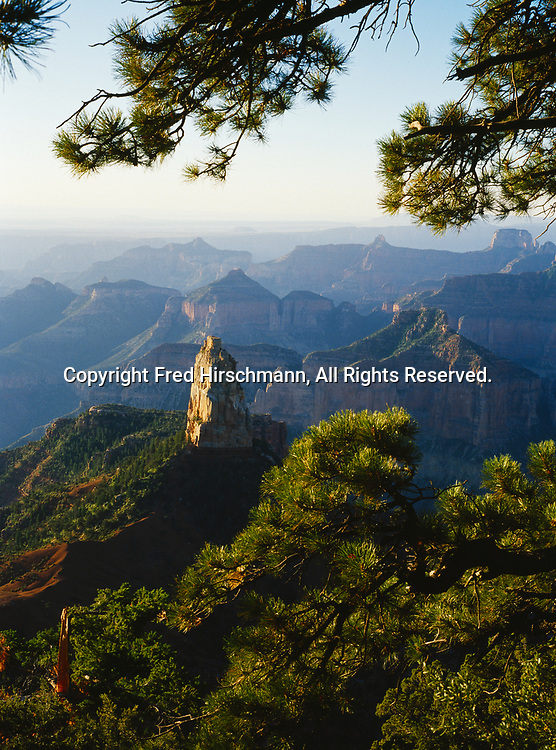 Mount Hayden framed by ponderosa pine, early morning view from Point Imperial, North Rim, Grand Canyon National Park, Arizona.
