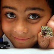 07/09/2015, Bradford-Haverhill: George Iker Richardson, 6, proudly shows a Grey Treefrong fund in Bradford-Haverhill <br /> <br /> The Grey Treefrong is a master of camouflage, according Mass Audubon. <br /> Their gray-brown frog blends in with the tree bark on which it perches. Its call, heard from spring through summer, is a short, high-pitched trill