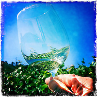 Wine glass reflection Sonoma, California.