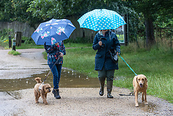 Licensed to London News Pictures. 07/08/202. London, UK. Summer washout. Dog walkers get caught in torrential rain in Richmond Park, southwest London today as thunderstorms continue to hit the South East with further showers expected tomorrow. Yellow weather warnings for England have been issued for thunderstorms with heavy rain, and possible flooding as the bad weather is set to continue until Monday. However brighter weather is finally forecast for next week with highs of 23c. Photo credit: Alex Lentati/LNP