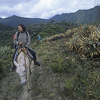 Riders pass between agave plants in the Amazon cloud forest near Chachapoyas, Peru.