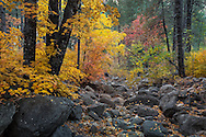 Oak Creek Canyon, autumn, Sedona, AZ