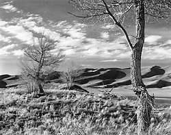 Late Afternoon, Cottonwood and Dunes, Great Sand Dune National Par, Colorado