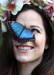Model Jessie May Smart with a Blue Morpho butterfly during a photocall for RHS Garden Wisley's Butterflies in the Glasshouse exhibition in Woking, Surrey.