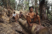 LOGGING, NOMADIC PENAN, MALAYSIA. Sarawak, Borneo, South East Asia. Tropical rainforest and one of the world's richest, oldest eco-systems, flora and fauna, under threat from development, logging and deforestation, 1991<br /> <br /> Home to indigenous Dayak native tribal peoples, farming by slash and burn cultivation, fishing and hunting wild boar. Home to the Penan, traditional nomadic hunter-gatherers, of whom only one thousand survive, eating roots, and hunting wild animals with blowpipes. Animists, Christians, they still practice traditional medicine from herbs and plants. Native people have mounted protests and blockades against logging concessions, many have been arrested and imprisoned