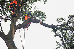 Steeple Claydon, 23rd September, 2020. Tree surgeons working with the National Eviction Team on behalf of HS2 Ltd fell a 200-year-old oak tree alongside the East West Rail route known locally as the '7 Sisters Oak' as part of works connected to the HS2 high-speed rail link. A small group of local people and anti-HS2 activists based at the nearby Poors Piece Conservation Project watched the felling of the tree, which was home to bats and other species, whilst monitored by a joint force of around fifty bailiffs, security guards and police officers from Thames Valley Police.