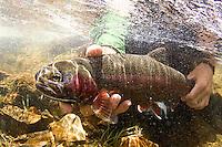 Mike Weir fly fishing near Lake Tahoe, CA
