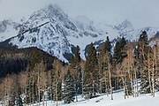Aspen and pine forests at the base of the Sneffels Range, San Juan Mountains, Colorado.