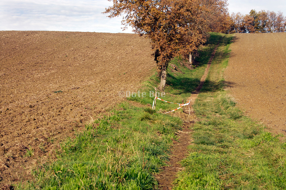 agricultural field with walking path