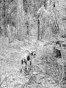 Sugar with elk spine bone on trail