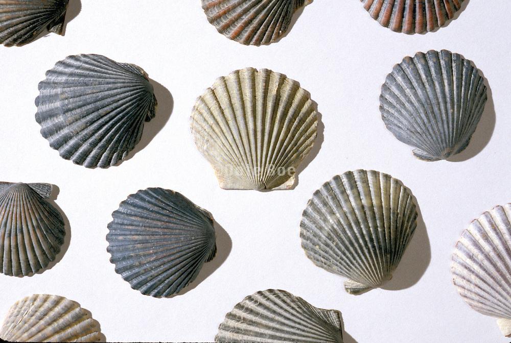 Still life with seashells