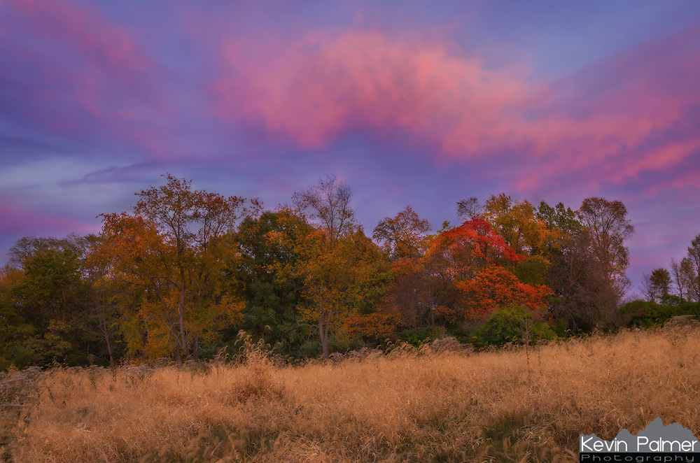 Because of the lack of rain lately, the fall colors have not been as widespread this year in Illinois. Many of the leaves are just drying up and falling. But there is still some colorful foliage to be found, you just have to look for it. I found this bright red tree in a local park just before the setting sun painted the sky a soft pink and purple.