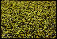 20: PANTANAL AQUATIC PLANTS
