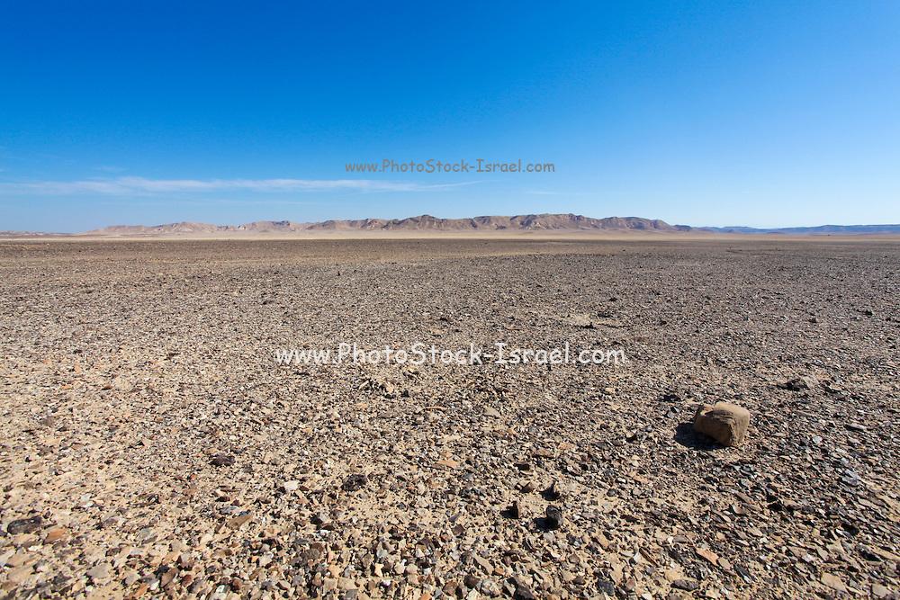 Israel, Negev Desert landscape. The Bulbus rock field in front of Mount Zin
