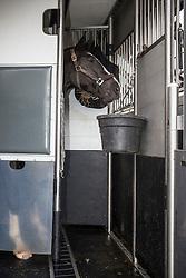 Marcel Jordan Horse Transport - Meijel 2012<br /> © Dirk Caremans