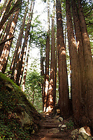 4 August 2006: Walking steps along a hiking path in the forest amongst tall redwood strees along Highway 1 through central California along the coast of Big Sur.