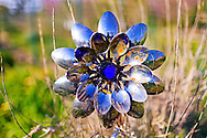 A shiny circular garden ornament made from outward-pointing spoons with a blue stone in the center. WATERMARKS WILL NOT APPEAR ON PRINTS OR LICENSED IMAGES.