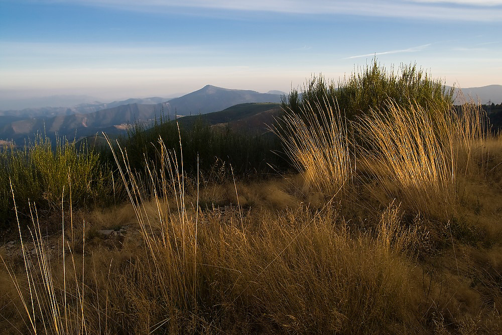 The soft glow of sunset illuminates high grasses and hilltops above the village of O Cebreiro in the countryside of Galicia, Spain along the Camino de Santiago pilgrimage.