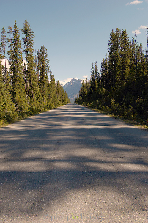 Icefields Parkway towards the Rocky Mountains, British Colombia, Banff National Park, Canada, North America.