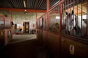 Centro ippico Pratoballino a Cornate d'Adda...Equestrian center Pratoballino at Cornate