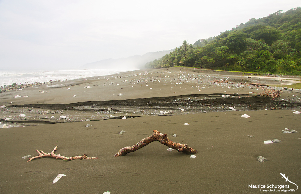 One of the earth's most species diverse forest - Corcovado National Park, Costa Rica.