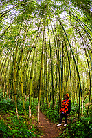 Bamboo forest, Dorze, Ethiopia.