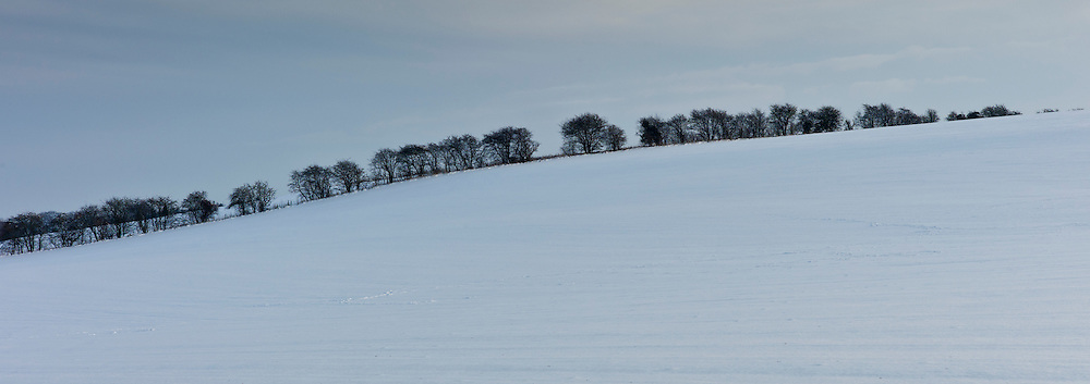 Row of trees in winter landscape in Swinbrook, The Cotswolds, UK
