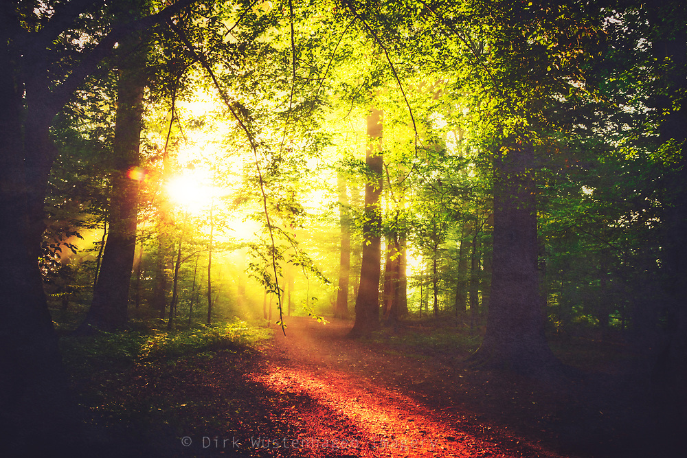 Sunny early September morning in the forest